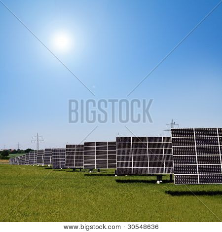 Solar Plants In The Rows