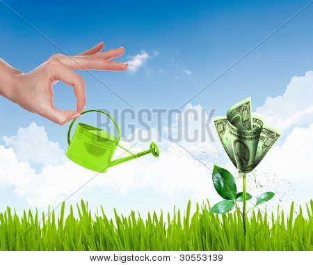 Human hand with a pot watering growing money tree