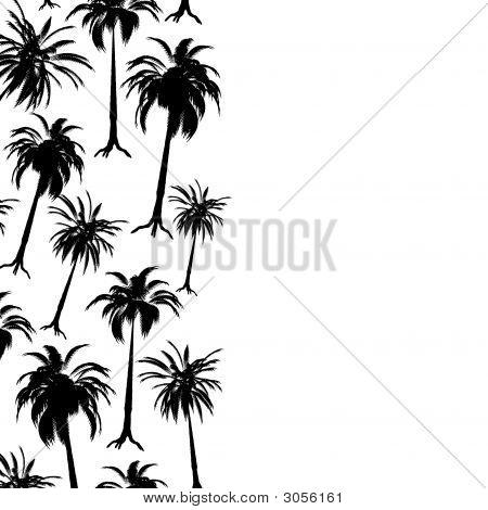 Palm Border