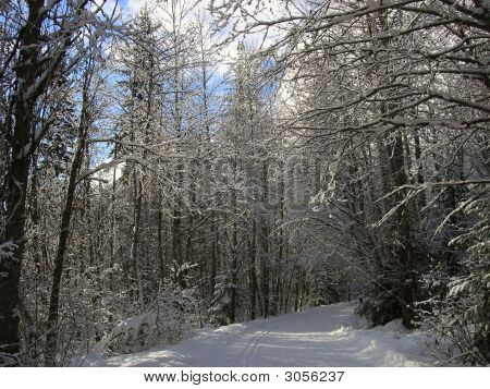 Snowy Recreational Path In A Forest