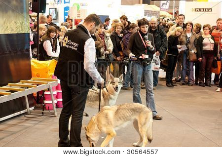 Paris - February 26: Speech On The Wolf At The Paris International Agricultural Show 2012 On Februar