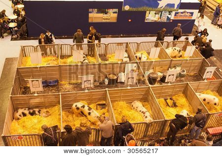 Paris - February 26: Top View On The Pigs Corner At The Paris International Agricultural Show 2012 O