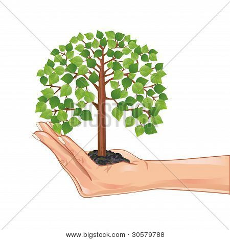 Hand Holding A Green Tree, Isolated On White