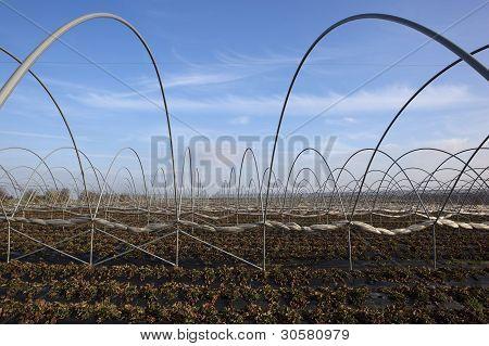 Strawberry Fields In Winter