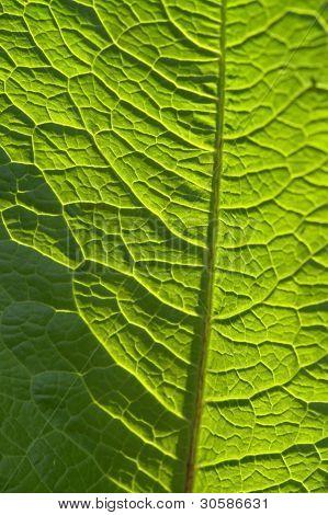 Sunny Geeen Leaf Closeup