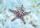 Orange Starfish On White Sea Shore In Sunlight. Underwater Photo Of Star Fish In Tropical Seashore.  poster