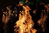 Wood Fire On Black Background.flames Of Fire On Black Background. Fire Rages In The Dark. Bonfire At poster