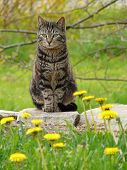 picture of tabby cat  - one of many of our household cats
