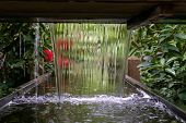 Tranquil Water Feature In A Lush Beautiful Green Woodland Garden With Dense Foliage. poster