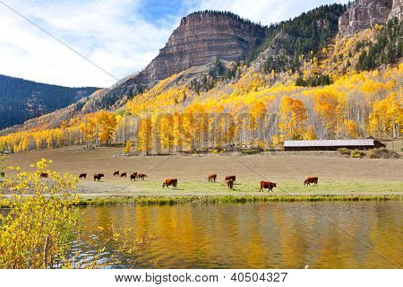 Cattle Grazing High In The Mountains