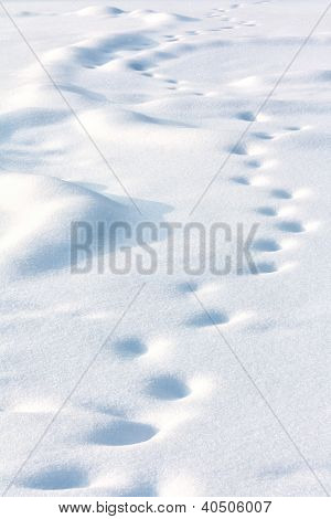 Lonely Drifted Tracks On White Snow