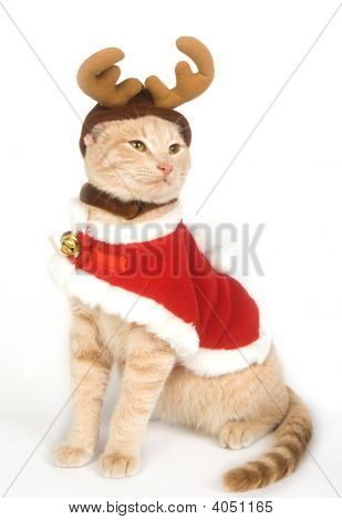 Kitten With Antlers