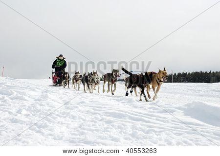 Ashton hond Derby