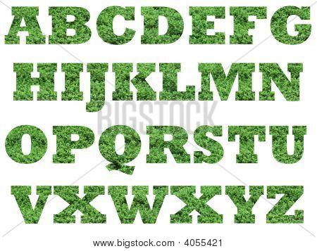 Alphabet Grass Font