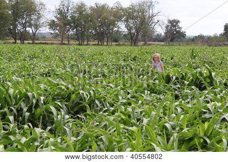 Little girl walking in a field of corn