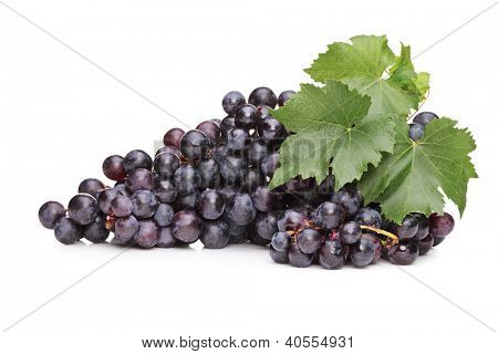 A studio shot of blue grapes with green leaf isolated on white background