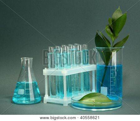 test-tubes and leaf tested in petri dish on grey background
