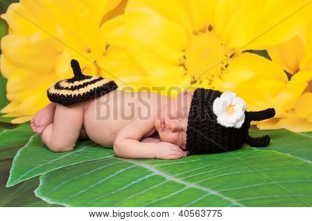 Newborn Baby Girl Wearing a Bumblebee Costume