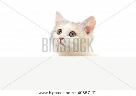 Kitten Hanging Over Blank Posterboard