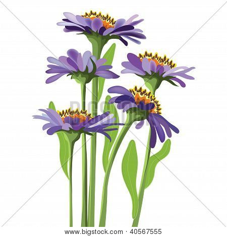 Vector Floral Design, Purple Aster