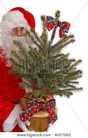 Santa With Xmas Tree