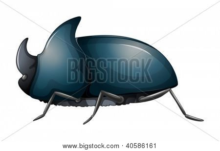 Illustration of a rhinoceros beetle on a white background