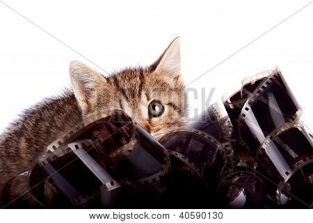 The Striped Kitten Hides Behind A Film