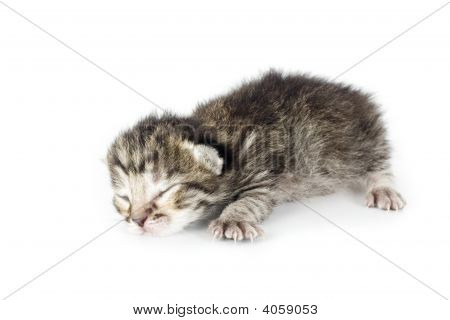 Very Young Kitten Sleeping