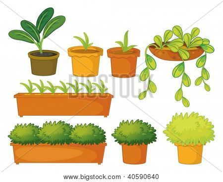Illustration of various plants and pots on a white background