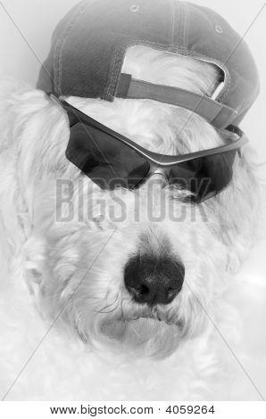 Dogs Rock