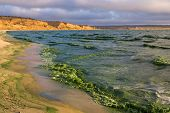 picture of green algae  - Blooms of blue - JPG