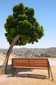 bench under a tree at Amman Citadel