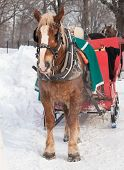 stock photo of sleigh ride  - Brown horse and red sleigh in winter - JPG