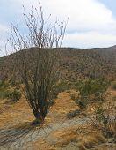 picture of anza  - anza borrego area desert - JPG