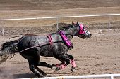 image of chariot  - horses in a chariot race on a sandy track - JPG