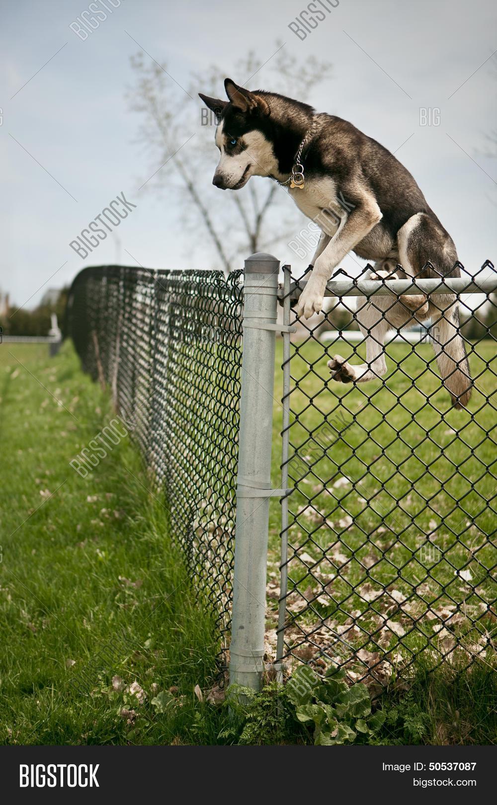 dog jumping over outdoor dog park image u0026 photo bigstock