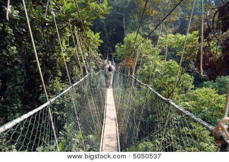 Taman Negara - Canopy Walkway