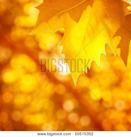 Abstract autumnal background, soft focus, dry golden maple tree leaf border, beautiful foliage, falling leaves, autumn nature concept
