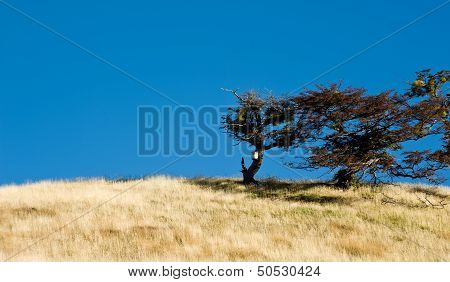 Tree Growing In The Wind