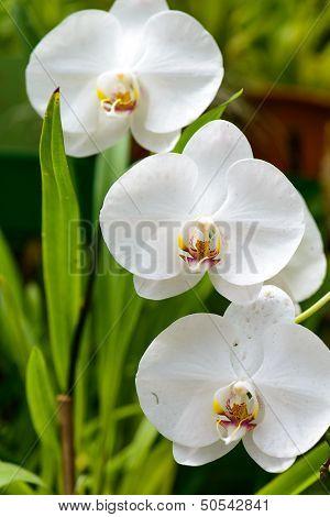 Sri Lanka. Royal Botanic Gardens. Different Types Of Orchids