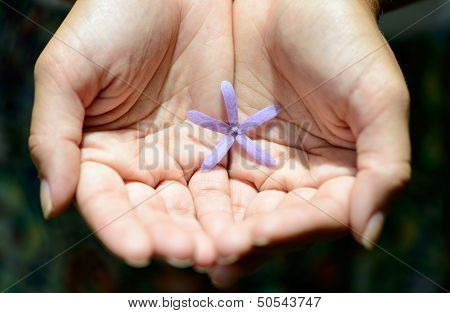 Small Purple Flower In Her Hand. Preserve The Nature.
