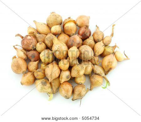 Yellow Onion Bulbs