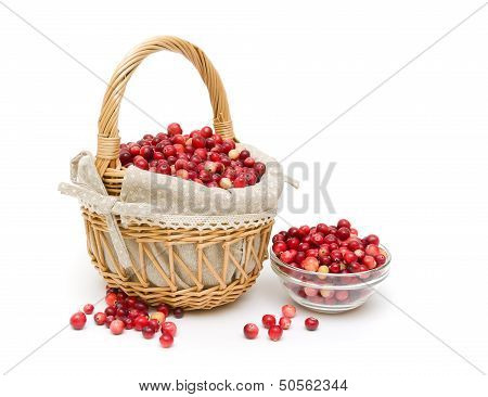 Ripe Cranberries Isolated On A White Background. Horizontal Photo.