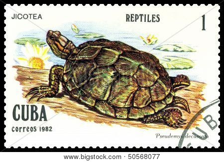Vintage  Postage Stamp.pseudemys Decussata.
