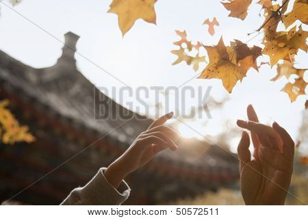 Human hands reaching for a leaf in the autumn, lens flare