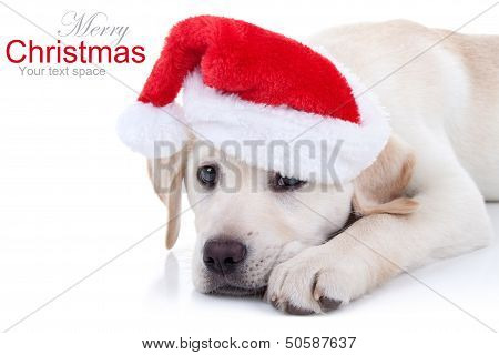 Christmas Labrador puppy dog in Santa hat on white (with sample text)