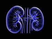 foto of pelvis  - Digital illustration of kidney in colour background - JPG