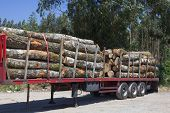 picture of logging truck  - Wood Transporters - JPG
