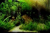 stock photo of freshwater fish  - A beautiful planted tropical freshwater aquarium with fish - JPG
