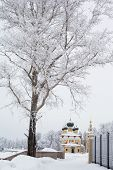 foto of uglich  - White trees and yellow church in winter in Uglich - JPG